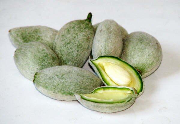 Green_almonds